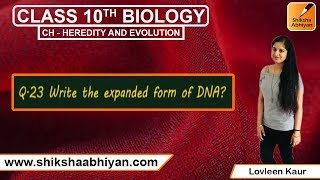 Q23 Write the full form of DNA.