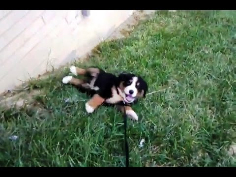 'Puppies Rolling Down Hills Compilation'    CFS