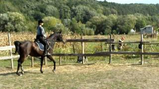 Интрига... учим рысь... октябрь2011