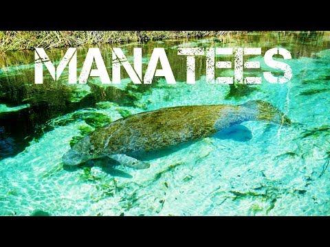MANATEES and KAYAKING Down The Weeki Wachee River in 4K