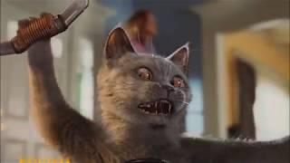 Кошки против собак на 31 канале