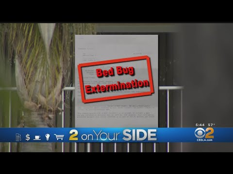2 On Your Side: Bed Bug Fight