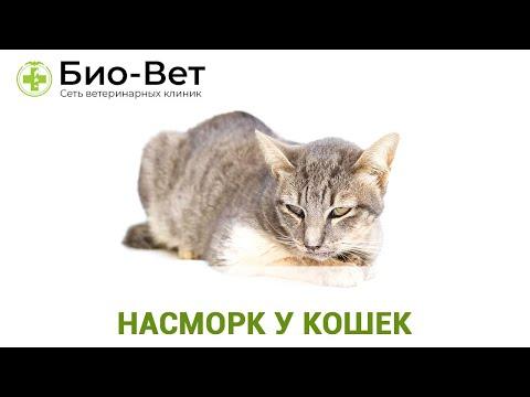 Кошка + Кот = Котенок