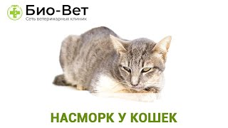 Насморк у кошек. Ветеринарная клиника Био-Вет.