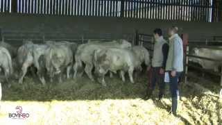 Bovinéo -  Présentation de l'activité bovins maigres