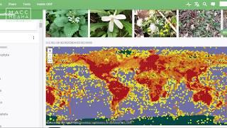 О растениях Камчатки всему миру | Новости сегодня | Происшествия | Масс Медиа / Видео