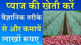 Onion Farming Scientific Technique || प्याज की खेती करें वैज्ञानिक तरीके से और कमायें लाखों रूपए -