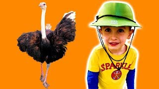 VLOG Сафари Парк в Нидерландах #2 - окрестности и зоопарк с KuSaNiKi