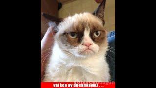 KOMİK HAYVANLAR VİDEOLARI 2020 - FUNNY CATS #10