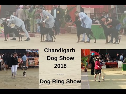 Chandigarh Dog Show 2018 - Dog Ring Show