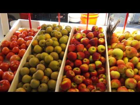 Terhune Orchards, Princeton, NJ - Apple Harvest