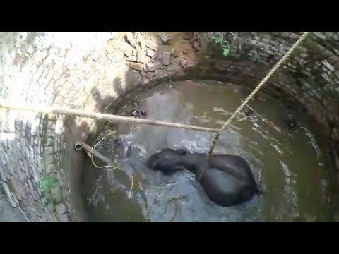 Keith and Tony - WATCH: Villagers Save Baby Elephant From Well