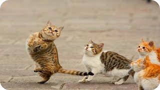 Смешные Кошки 2015 / Веселая Видео Подборка (#1) / Смешные Животные 2015 /