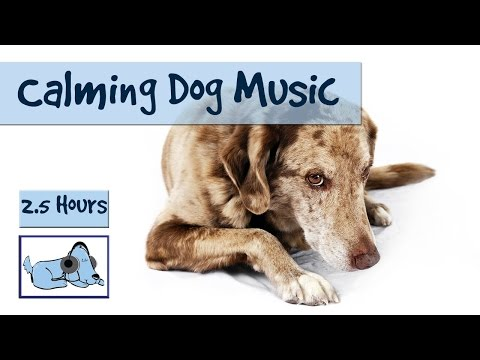 Over Two Hours of Calming Music for Dogs - Dog Relaxation Music to Calm Your Dog!