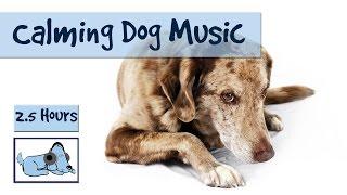 Musik für Hunde und Welpen. Helfen Sie Ihrem Eile und ruhiger Hund zu schlafen.