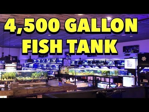 4,500 GALLON AQUARIUM! THE BIGGEST LITTLE FISH STORE IN TEXAS, AQUARIUM GALLERY FISH SHOP TOUR