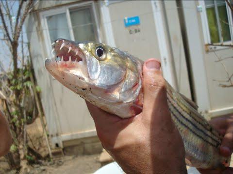 рыбалка в африке ютуб