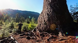 The STORY of BIG LONELY DOUG | Second LARGEST-TREE in CANADA