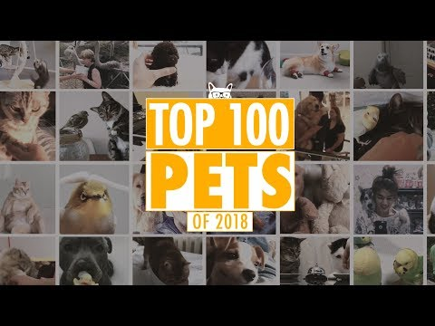 Best Pets Of The Year 2018 Part 1 | The Pet Collective