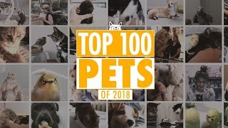 Best Pets Of The Year 2018 | Part 1