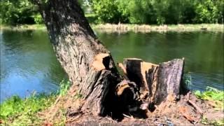 ТИХАЯ СОСНА ВЕСНОЙ   - г. Алексеевка Белгородская область(именно такой Алексеевцам на до следующей весны запомнится наша любимая река