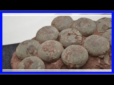 Chinese construction workers stumble upon 30 perfectly preserved dinosaur eggs from cretaceous peri