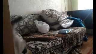кот и стикеры