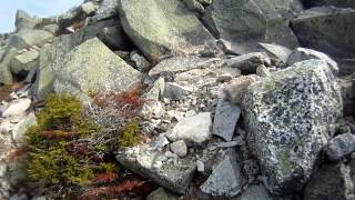 Climbing the Abol Trail to the summit of Mt. Katahdin