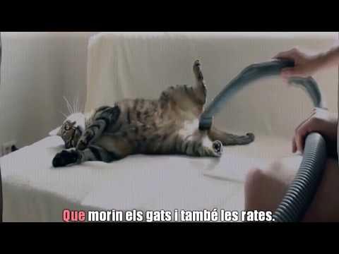 Caritat Humana - DELICTE D'ODI (Karaoke singalong version)