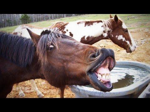 Смешные видео про лошадей