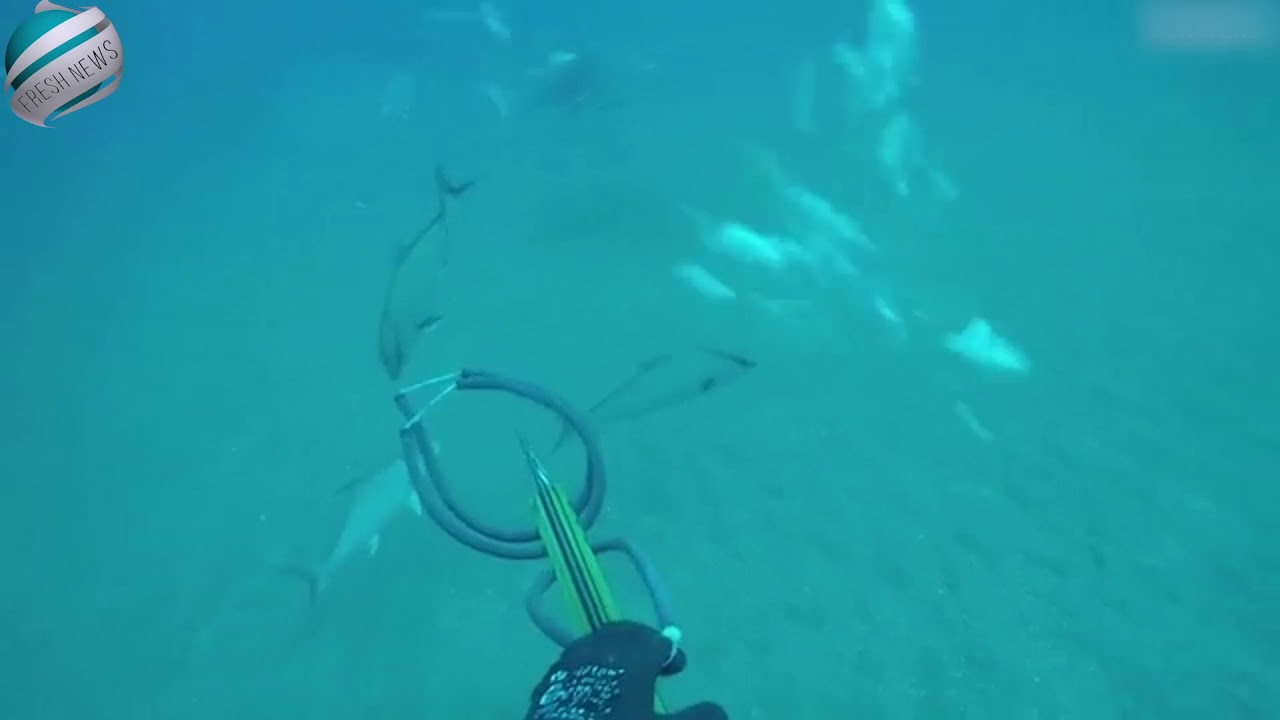 Diver forced to battle shark in stunning new attack footage | Breaking News!