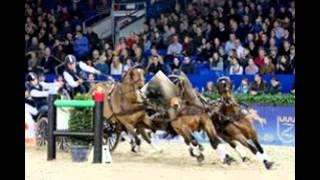 Baixar l'attelage de chevaux de trait, de selle et poney