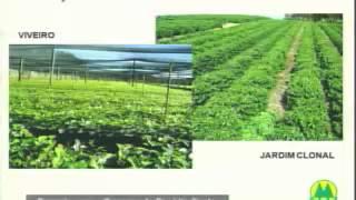 Cooperativismo em café conilon: Cooperativa Agrária dos Cafe