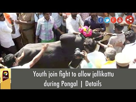 Youth join fight to allow jallikattu during Pongal | Details