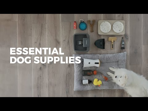 27 Items Every Dog Owner Should Have   ESSENTIAL SUPPLIES