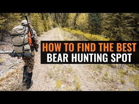 How To Find The BEST Bear Hunting Spot