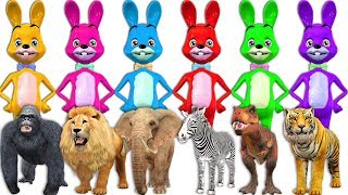 Learn Colors With Funny Bunny Plays PeekABoo With Wild Animals - Finger Family Nursery Rhymes