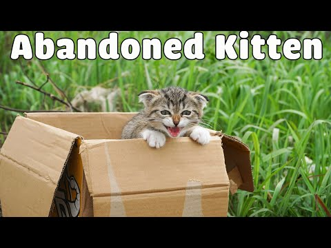 Rescue The Abandoned Kitten Crying At The Trash Cans |  Sreet Cat Rescue  Woa Mew