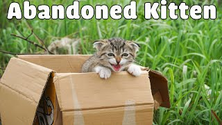 Rescue The Abandoned Kitten Crying At The Trash Cans |  Sreet Cat Rescue - Woa Mew