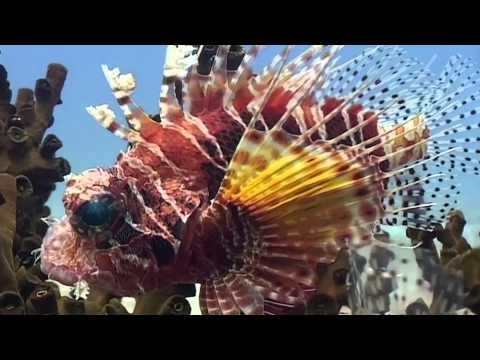 Marine Life Episode 3