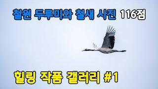힐링 작품 갤러리 #1  철원 두루미와 철새들의 향연 …