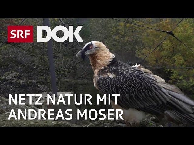 Im Kreis der Bartgeier | NETZ NATUR mit Andreas Moser | Doku | SRF DOK