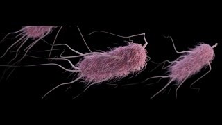 E. Coli PSA Video Biology Period 6 Nick Sementilli