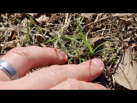 Preventing aggressive grasses like bermuda while growing food.