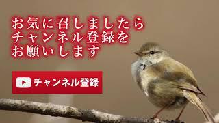 名倉潤はクリーンなイメージだったので… ☆良かったら、チャンネル登録お...