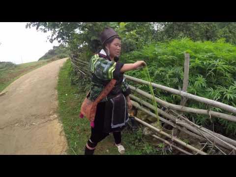Sapa Trekking with Hmong Guide
