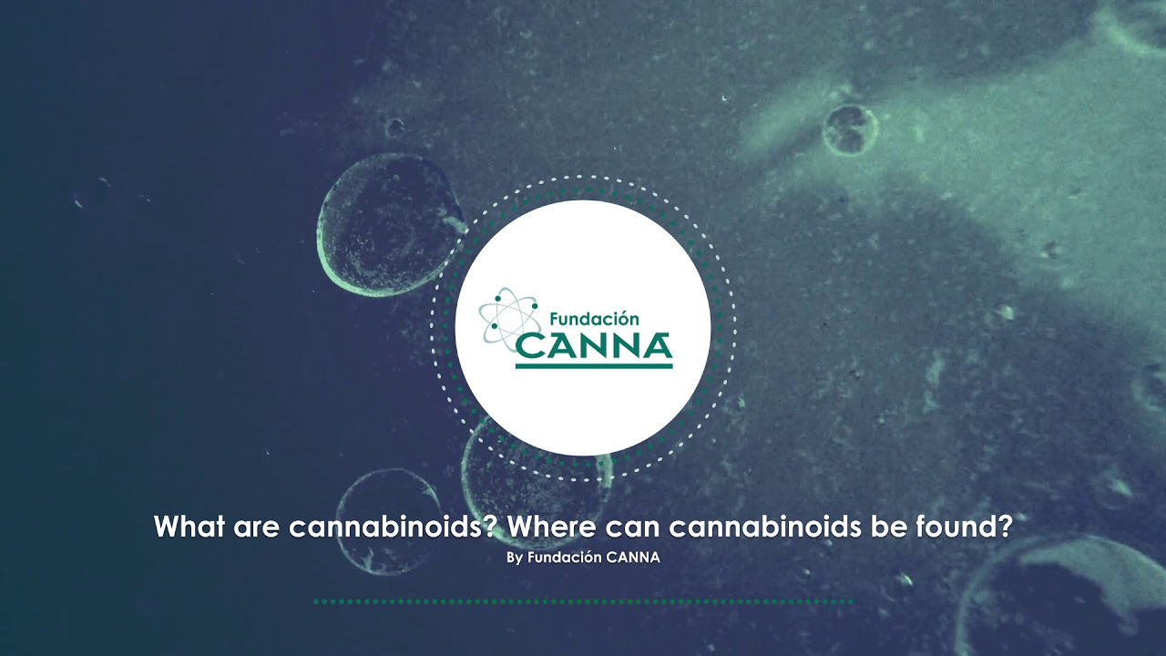 Cannabinoids - Audio Article (English)