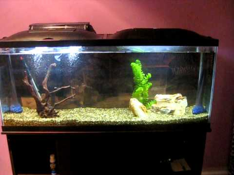 FISHLESS Cycling Aquariums!