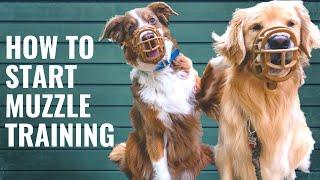 Dog Muzzle Training and Conditioning