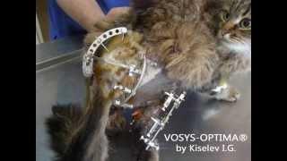 Лечение неправильно сросшихся переломов костей таза и голени у кошки(Cайт: http://vosys-optima.com.ua Лечение неправильно сросшихся переломов костей таза и голени (после первичного лечения..., 2013-05-04T22:09:15.000Z)